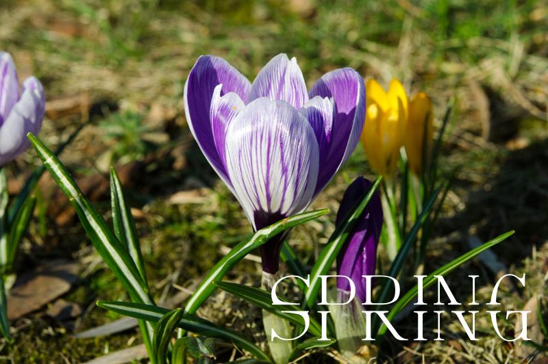 wiosna zdjęcia produktowe